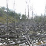Beaver impact in TDF