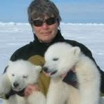 foto con osos polares